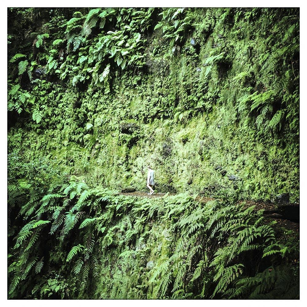 pfad des grünen unsinns_S